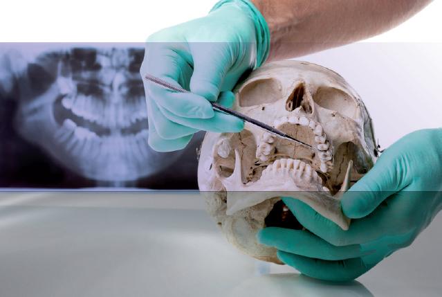 Curso en piezas anatomicas